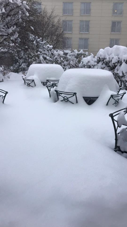 A garden area covered under snow