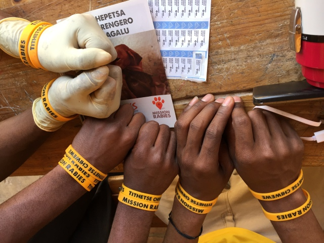 Pairs of hands on a table, displaying the Mission Rabies wristbands