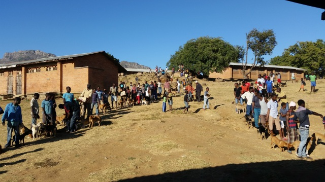 Long queues of people waiting with their dogs on a hill, beside some buildings