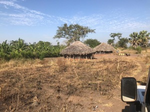 Event banner image for Global African Swine Fever Research Alliance (GARA) scientific meeting 2020. Two African huts in a clearing, surrounded by bushes and trees