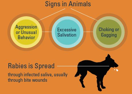 Infographic of clinical signs of Rabies