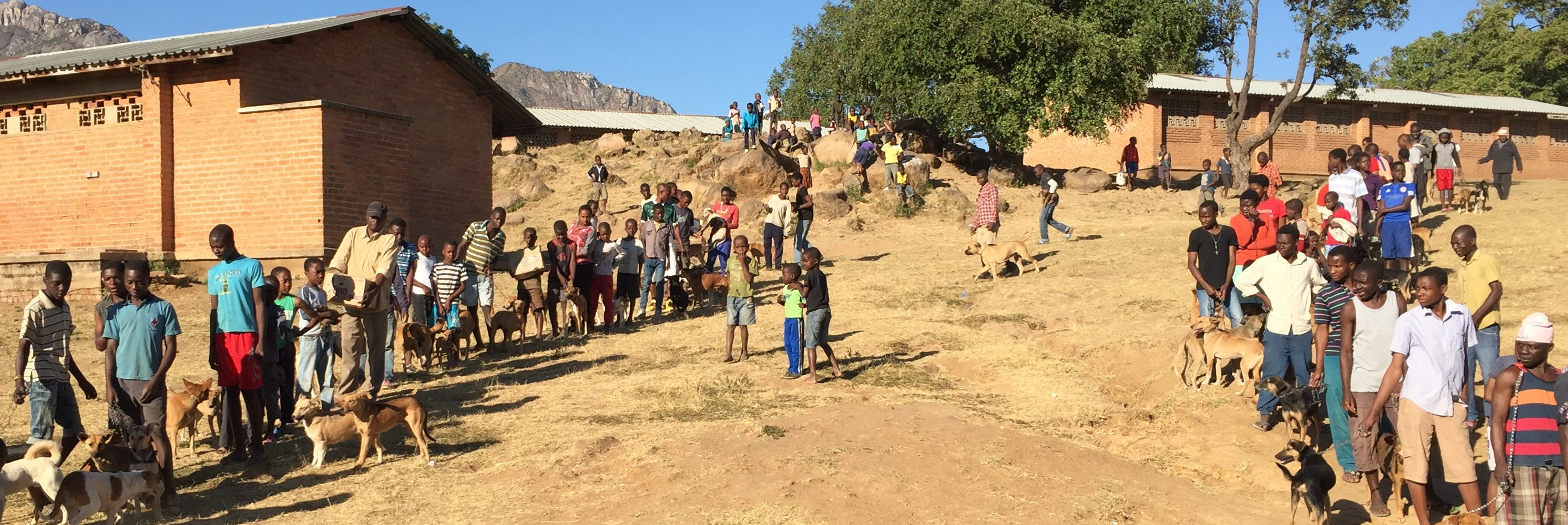 Rabies Elimination article banner image - Villagers queuing on a hill with their dogs
