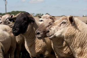 10th International Sheep Veterinary Congress